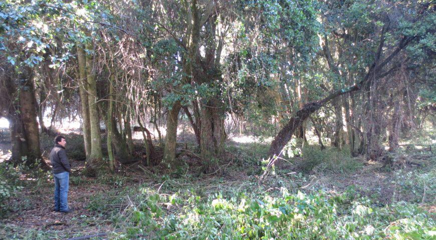 Avifel reforesta con bosque nativo 23,2 hectáreas en Colhue