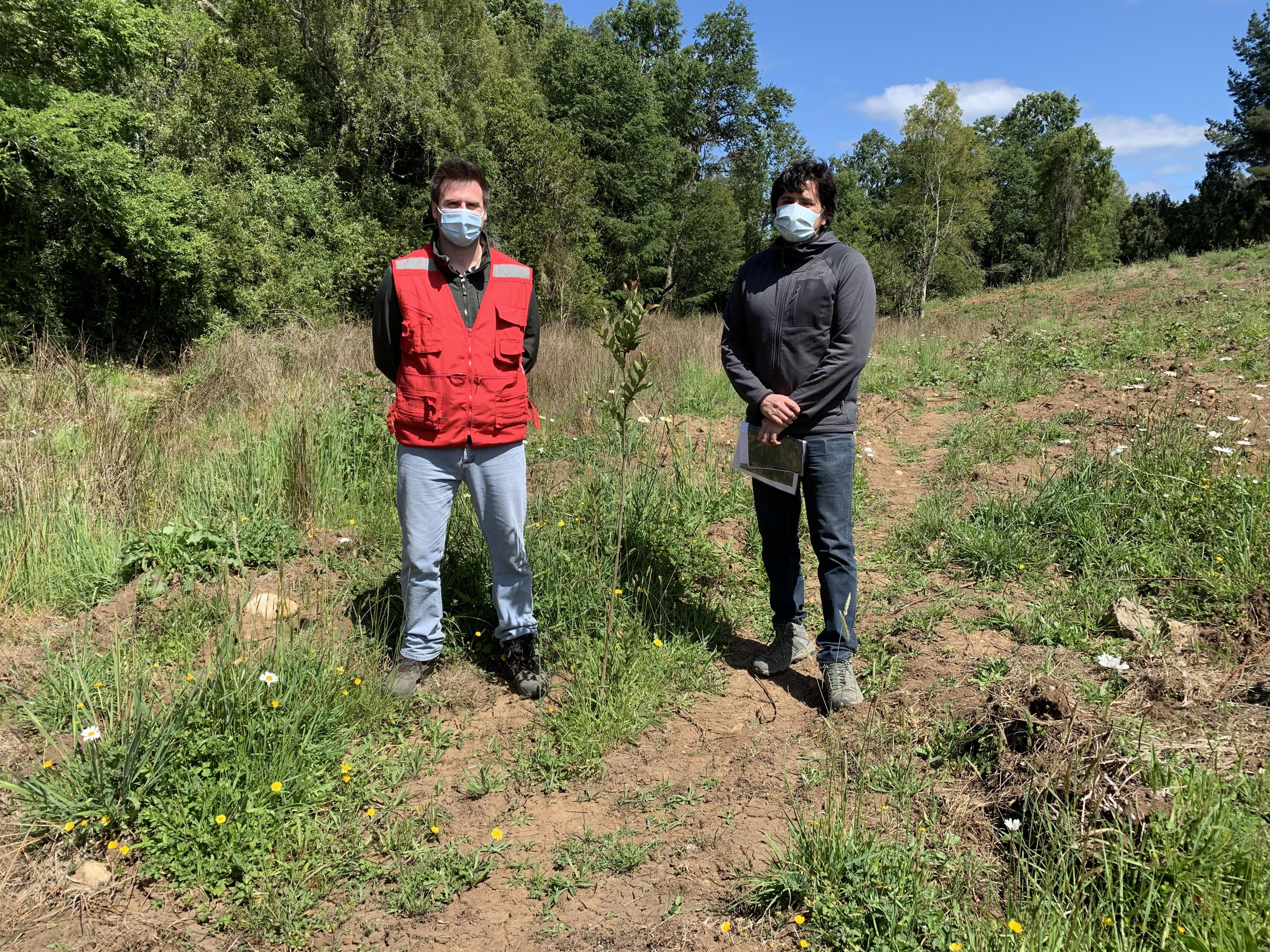 Avifel reforesta predio en Colhue con árboles nativos
